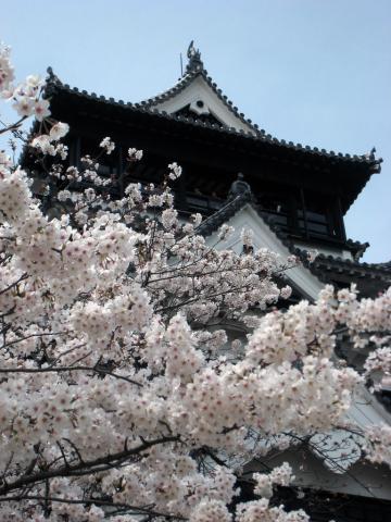 Japani pähkinänkuoressa