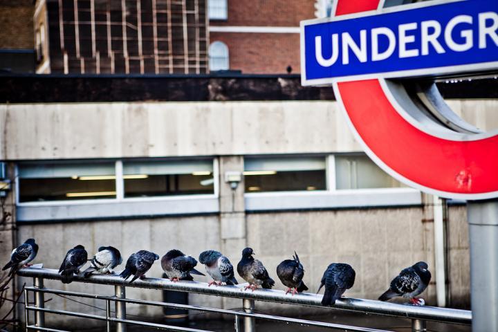 äkkilähtö Lontoo